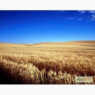 Семена Озимой пшеницы Губернатор Дона