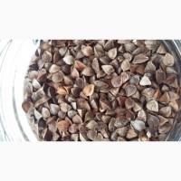 Куплю семена гречихи от 40 тонн