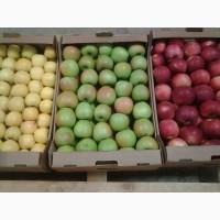Продажа оптом экологически чистых яблок Кристин с доставкой по России