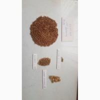 Продаем Семена льна масличного крупным оптом