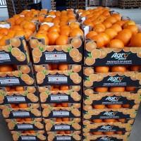 Апельсин. Египет
