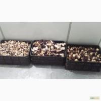 Продам грибы белые замороженные, сушеные