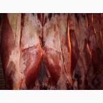 Мясо на кости говядина 1 кат п/т замор. ГОСТ Р 54315-2011 (Россия 85+ Белоруссия 100+)