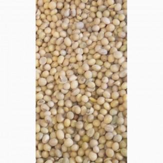 Соя зерно бобов