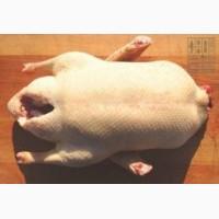 Продам мясо домашнего гуся