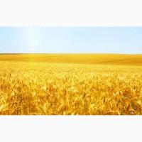 Пшеница 5 класс 7000 тонн