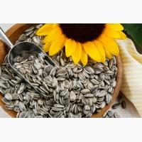 Семена подсолнечника (сортовые)