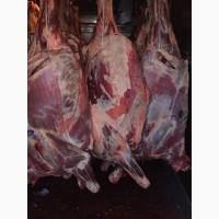 Продам мясо охлажденное