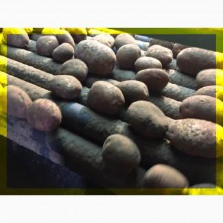 Картофель оптом. Честная цена. Доставка по РФ