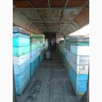 Продаю пасеку с пчелами, ульями, медом