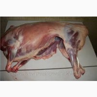 Продам мясо ягнят, барана