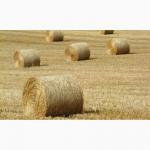 Продаётся солома (ржаная, пшеничная) в больших рулонах