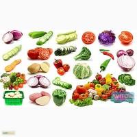 Реализуем овощную продукцию от КФХ заключаем договора на будущий урожай