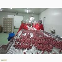 Продам замороженную малину из Боснии и Герцеговины