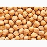Семена Нута «Приво1»