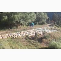 Пчелопакеты карпатка на 2021 год Доставка Бесплатно