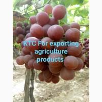 Продам виноград из Египта