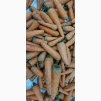 Морковь мытая 2 сорт