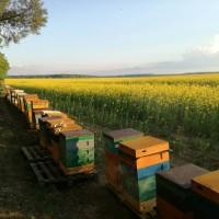 Принимаю заказы на пчелопакеты, пчеломатки Бакфаст