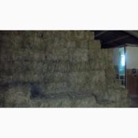 Сено луговых и посевных трав