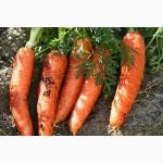 Продаем морковь оптом
