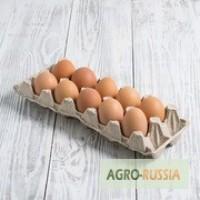 Продаю инкубационное яйцо от кур породы Кучинская Юбилейная
