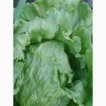 Продам салаты разных видов