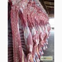 Мраморная говядина полутуши охлажденные зернового (концентрированного) откорма