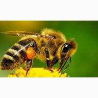 Пчелопакеты на 2018 год