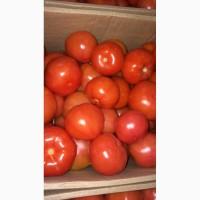 Помидоры / томаты