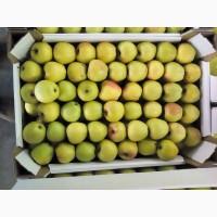 Оптовая поставка яблок по разумным ценам. Разнообразие сортов и безукоризненное качество