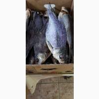 Рыбоперерабатывающее предприятие реализует речную вяленую и копченую рыбу в ассортименте