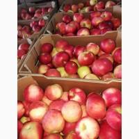 Продам яблоки Айдаред, Македония