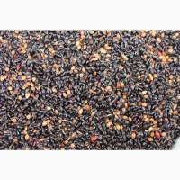 Семена суданской травы. Кинельская 100