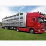 Перевозка скота.Скотовозы