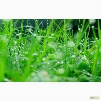 Специи. пряности. сушеные травы и овощи. оптом