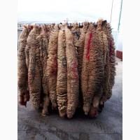 Продаем шерстные шкуры мериноса