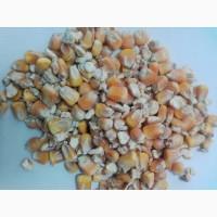 Продам кукурузу фуражную ГОСТ