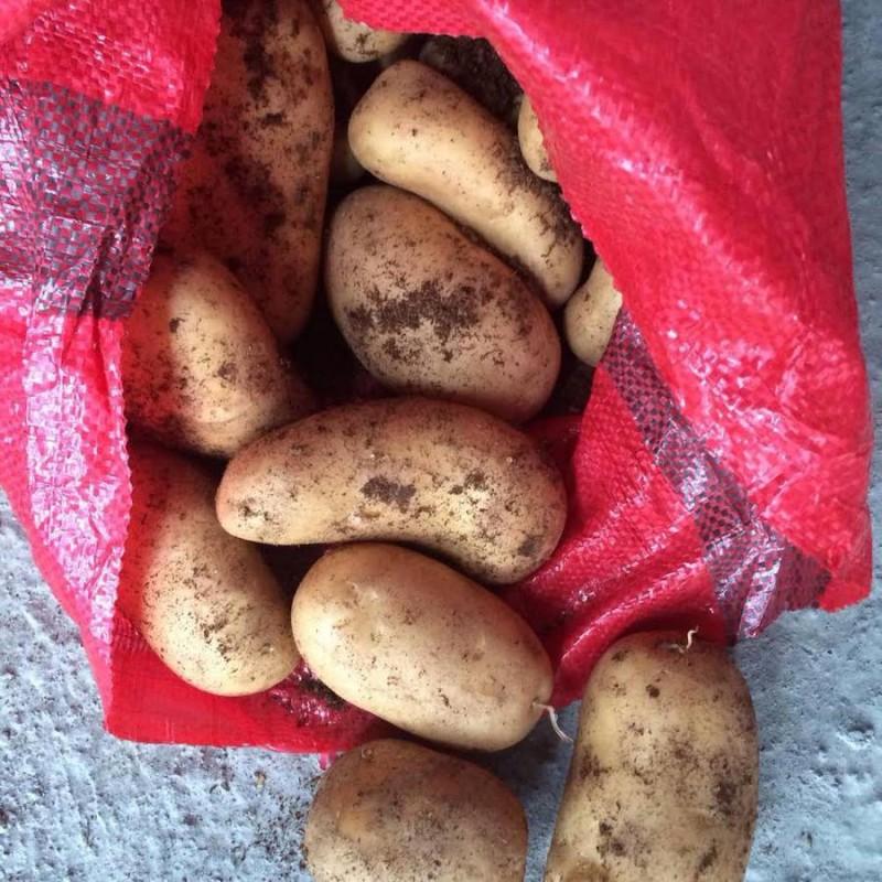 прибрежная зона египетский картофель фото потребность наблюдении