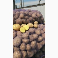 Продаем картофель, лук, свекла, морковь