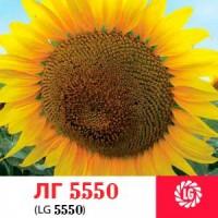 Гибрид подсолнечника ЛГ 5550 Лимагрейн (LG)
