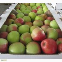 Яблоки оптом (Крым) от производителя