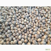 Продам сухой хороший грецкий орех в скорлупе из Краснодара