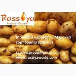 Свежий картофель из Марокко