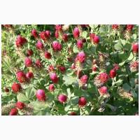 Семена Клевер луговой Дымковский красный 1- массовая