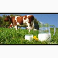Продам коровье сырое цельное молоко жир 4, 3 %, белок 3, 2 %