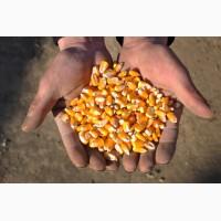 Семена кукурузы Росс 140 СВ (2016-2017 г.)