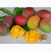 Экзотические фрукты, Манго Оптом