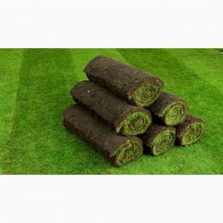 Рулонный газон Элитный от 115 руб/рулон