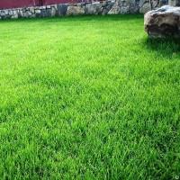 Травосмеси газонные